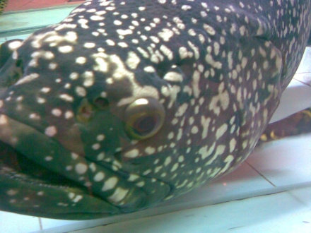 2007-06-19-fishy.jpg
