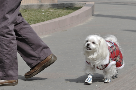 2008-02-23-doggystyle.jpg