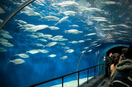 2011-03-06 Shanghai Aquarium-03