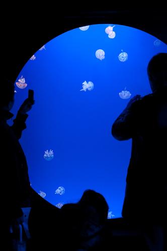 2011-03-06 Shanghai Aquarium-4