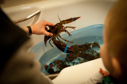 2011-04-03 lobsters-1