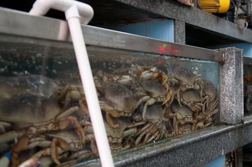 2011-04-03 tong chuan fish market shanghai-3